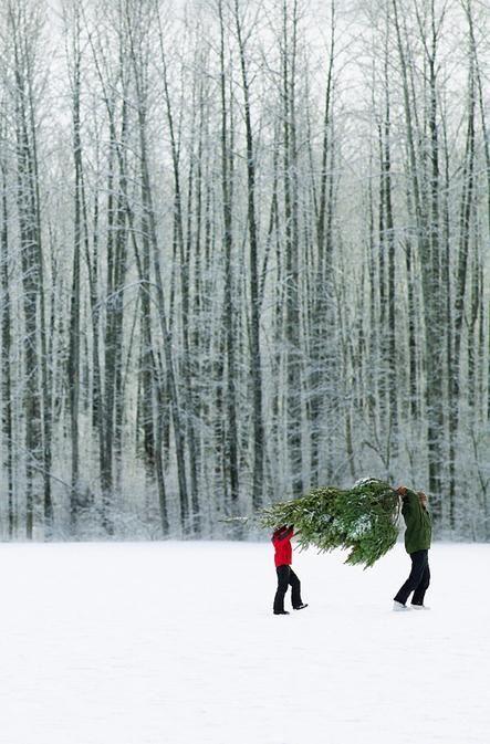 foto recogiendo arbol de navidad